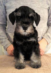 Piper pup boy face