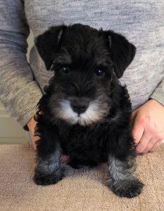 Piper pup dark girl face