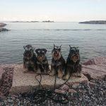 Niina's dogs